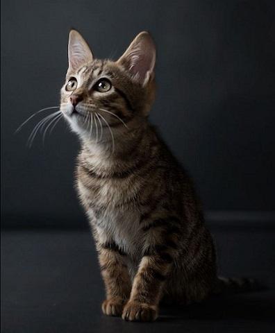 kitten kijkt naar baasje
